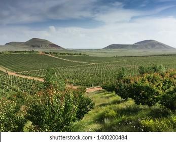 Aragatsotn Province, Armenia - September 2018: Beautiful panoramic view of vineyards in Armas Winery, Aragatsotn Province, very near Yerevan. Armenia has a long tradition in wine making.