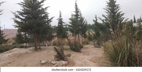 Arar trees It has a beautiful view