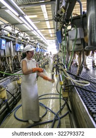 Araras, Sao Paulo, Brazil, november 25, 2003. milks cows in milking facility
