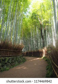 Arashimaya Bamboo Forest in Kyoto Japan