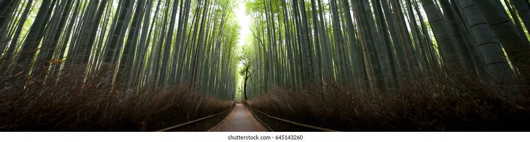 Arashiyama bamboo forest , Honshu, Japan