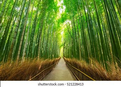 Arashiyama bamboo forest in Kyoto Japan