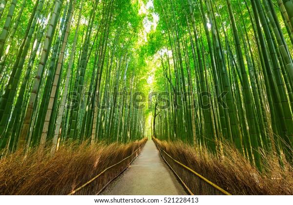 Arashiyama bamboo forest wallpaper