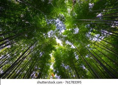 Arashiyama bamboo grove at spring time in Kyoto, Japan. On CNN, Arashiyama was referred to as one of the most beautiful groves on Earth.