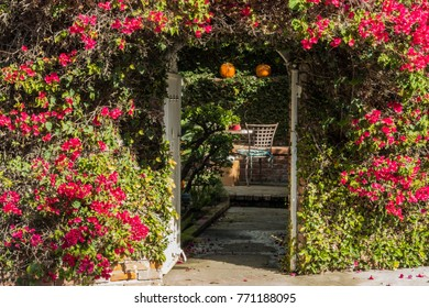arbor covered in vines entry way