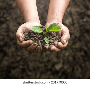 Arbor day concept: Human hands holding seed tree with soil on blurred agriculture field background