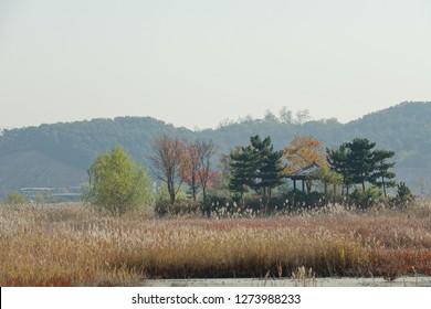 arbor in reed field