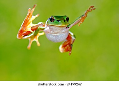 Arboreal frog