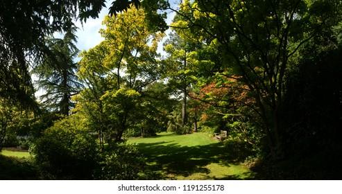 Arboretum park in early summer, Arboretum Kalmthout, Antwerp/Belgium - August 7 - 2012