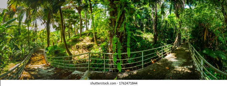 Arboretum Trail in Queen Sirikit Botanic Garden, Chiang Mai Province.