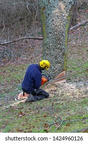 An arborist kneels next to an old cherry tree as he uses a chain saw to take fell it on a winter's day
