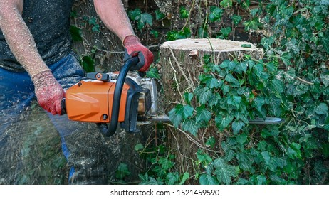 An Arborist or Tree Surgeon uses a chainsaw to cut a tree stump