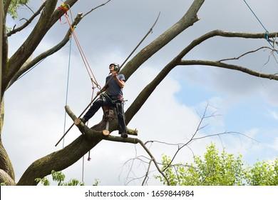 Arborist Warrior, Professioneller Baumschneider, der mit Pol arbeitete, sah auf einem toten Elm Baum.