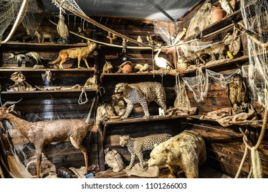 Arc of Noah with many embalmed animals