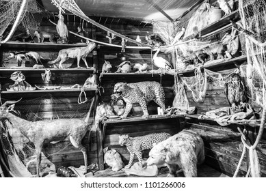 Arc of Noah with many embalmed animals