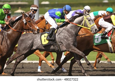 ARCADIA, CA - 4 MAR: Gumption (#6), guided by jockey Mike Smith, competes in an allowance race at Santa Anita Park on Mar 4, 2010, in Arcadia, CA.