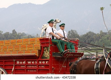 ARCADIA, CA - DEC 26: The world-famous Budweiser Beer Wagon, pulled by the team of Clydesdale horses, drives down the main track in a performance at Santa Anita Park on Dec 26, 2009, Arcadia, CA