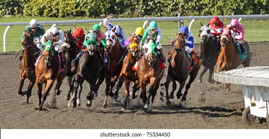 ARCADIA, CA - FEB 10, 2010: A field of thoroughbreds rounds the far turn in a race at historic Santa Anita Park on Feb 10, 2010 in Arcadia, CA.