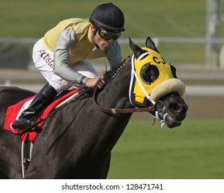 "ARCADIA, CA - FEB 16: Hall of Fame Jockey Gary Stevens pilots ""Great Hot"" to victory in The Santa Maria Stakes at Santa Anita Park on Feb 16, 2013 in Arcadia, CA."