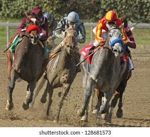 "ARCADIA, CA - FEB 16: Jockey Rafael Bejarano pilots ""Midnight Lucky"" (gray horse) to her first win at Santa Anita Park on Feb 16, 2013 in Arcadia, CA."