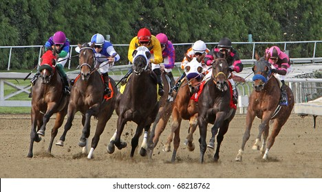 ARCADIA, CA - JAN 1: Horses round the far turn in a claiming race at Santa Anita Park on Jan 1, 2011 in Arcadia, CA. Eventual winner is Summers at Delmar (pink & purple).