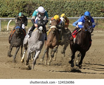 """ARCADIA, CA - JAN 12: The field turns for home in a maiden race at Santa Anita Park on Jan 12, 2013 in Arcadia, CA. Eventual winner is """"Branding"""" (white shadow roll) and jockey Gary Stevens."""