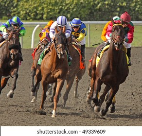 ARCADIA, CA - MAR 20: A field of thoroughbreds take the far turn and start down the homestretch at Santa Anita Park on March 20, 2010 in Arcadia, CA.