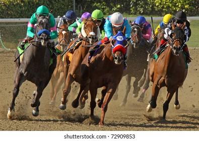 "ARCADIA, CA - MAR 5: Jockeys storm down the homestretch in a claiming race at Santa Anita Park on Mar 5, 2011 in Arcadia, CA. Eventual winner is ""Lutess"" (grey roan at left.)"