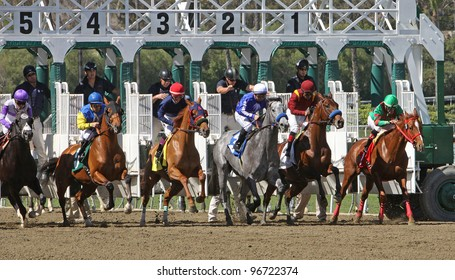 """ARCADIA, CA - MARCH 3: Jockey Martin Garcia pilots """"Stirred Up"""" (second from right) to his first win at Santa Anita Race Track on March 3, 2012 in Arcadia, CA."""