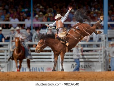 ARCADIA, FLORIDA - MARCH 9: Champion bronco rider hangs on his horse at the famous 84th All-Florida Championship Rodeo on March 9, 2012 in Arcadia, Florida