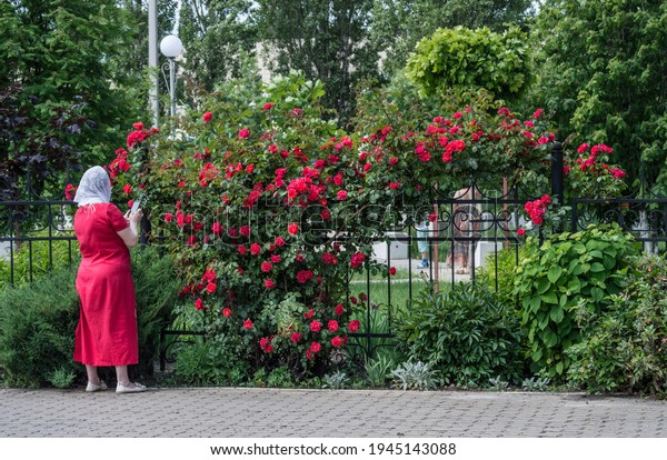 arch-blooming-red-climbing-roses-600w-19