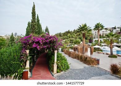 Arch of Bougainvillea purple flowers in Turkey resort.