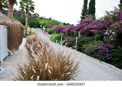 Arch of Bougainvillea purple flowers in Turkey.