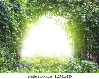 Arch creeper plant entrance gate with sunlight in the garden. Magic tree background.