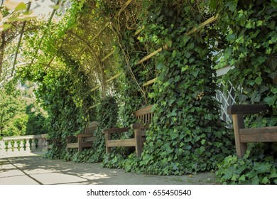 Arch with ivy