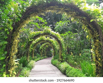 Arch way of orchids at Singapore Botanic Garden.