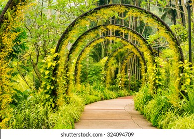 Arch way of yellow orchid from Singapore National Orchid Garden