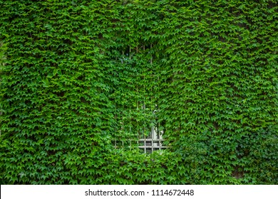 arch window hidden behind in wall in green plants background texture concept with empty space for copy or text