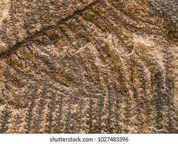 Archaeological background with stone texture and petrified prehistorical ferns frond