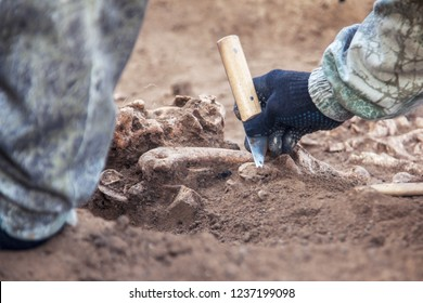 Archaeological excavation. The hands of archaeologist with tools conducting research on human bones, part of skeleton from the ground. Close up image of real process.