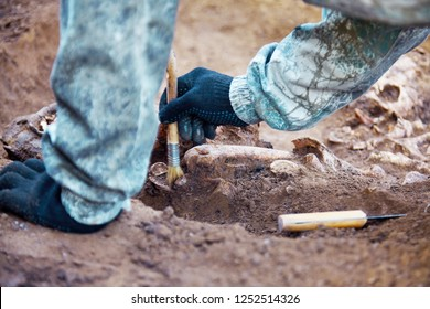 Archaeological excavation. The hands of archaeologist with tools conducting research on human bones, part of skeleton from the ground. Close up image of real process of digger.