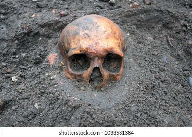 Archaeological excavation with old antique skull still half buried in the ground.