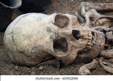 Archaeological excavations of an ancient human homo sapiens man reasonable Neanderthal bones skeleton and human skull