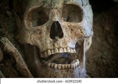 Archaeological excavations of an ancient human homo sapiens man reasonable Neanderthal bones skeleton and human skull