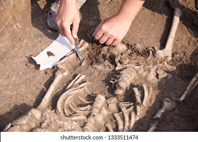 Archaeological excavations. The archaeologist in a digger process, researching the tomb, human bones, part of skeleton  in the ground. Hands with knife. Close up, outdoors, copy space.