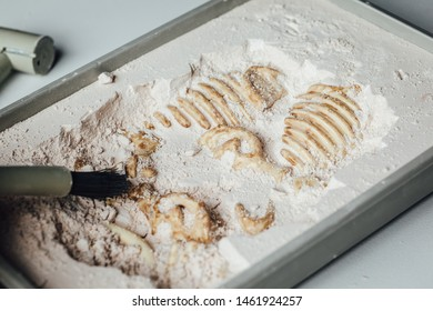 Archaeological excavations close up on a white background. Mammoth skeleton