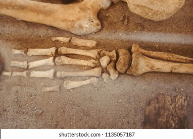 Archaeological excavations and finds bones of a skeleton in a human burial , a detail of ancient research, prehistory.