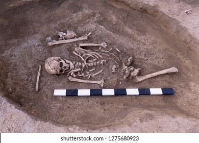 Archaeological excavations. Human remains (bones of skeleton, skulls) in the ground tomb. Real digger process. Outdoors, copy space, close up.