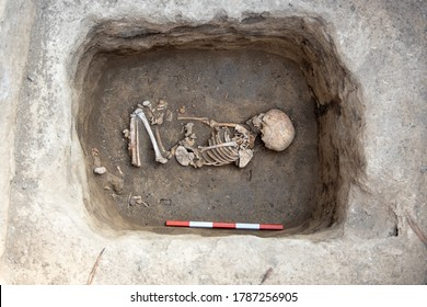 Archaeological excavations. Human remains, bones of skeleton and skulls of 6 year old child in the ground tomb.