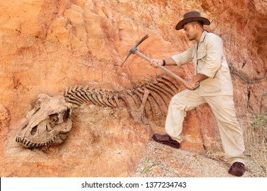 Archaeologist works on an archaeological site with dinosaur skeleton in wall stone fossil tyrannosaurus excavations.